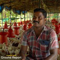 """""""கோழி பண்ணை அதிபர்னு சொல்றாங்க"""" Chicken Poultry Farm   Ground Report"""